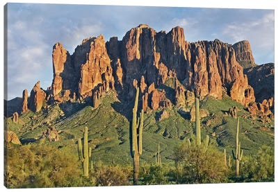 Saguaro Cacti And Superstition Mountains, Lost Dutchman State Park, Arizona II Canvas Art Print