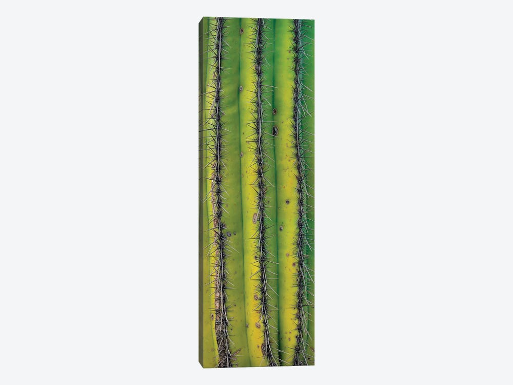 Saguaro Cactus Close Up Of Trunk And Spines, North America by Tim Fitzharris 1-piece Canvas Art
