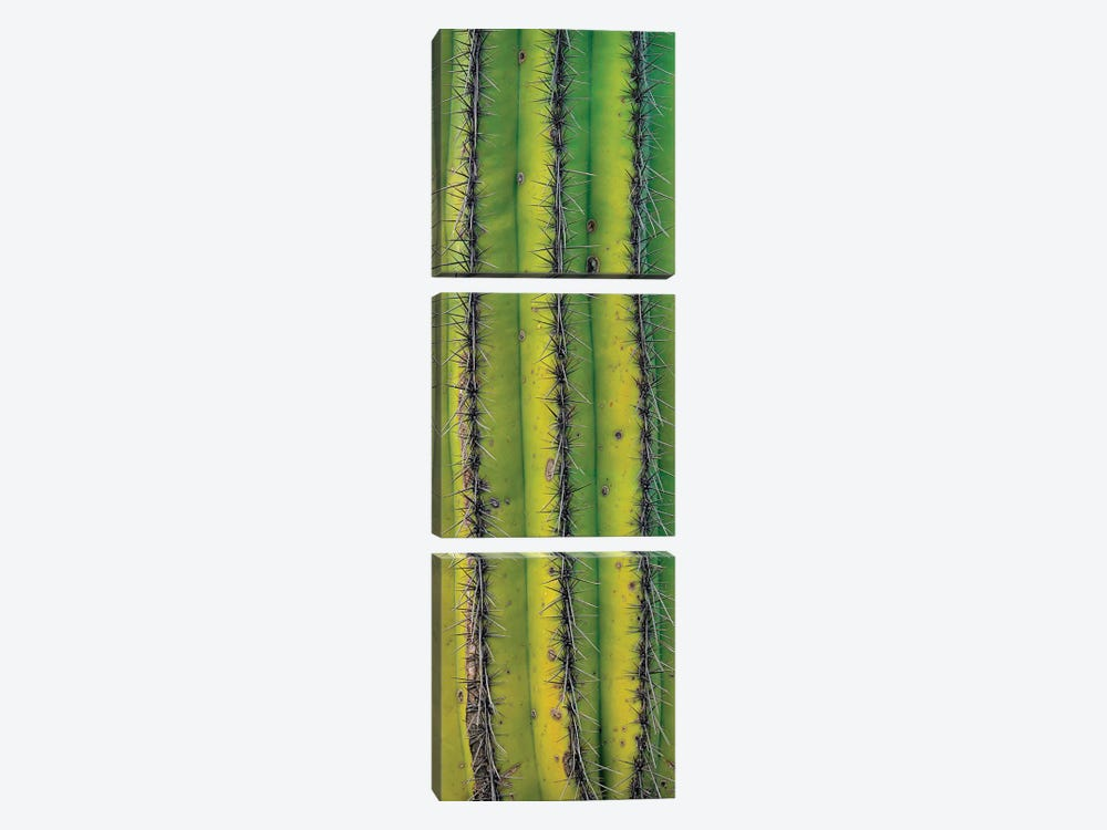 Saguaro Cactus Close Up Of Trunk And Spines, North America 3-piece Canvas Artwork