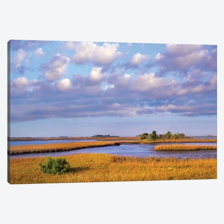 Saltwater Marshes At Cedar Key, Florida Canvas Print #TFI941} by Tim Fitzharris Art Print