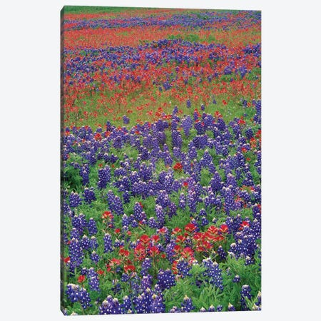 Sand Bluebonnet And Paintbrush Flowers, Hill Country, Texas III Canvas Print #TFI945} by Tim Fitzharris Canvas Art