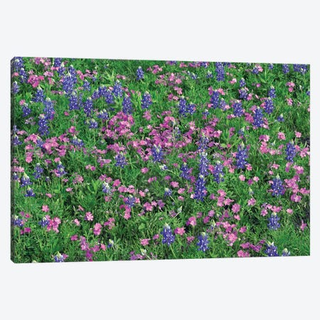 Sand Bluebonnet And Pointed Phlox Canvas Print #TFI946} by Tim Fitzharris Canvas Artwork