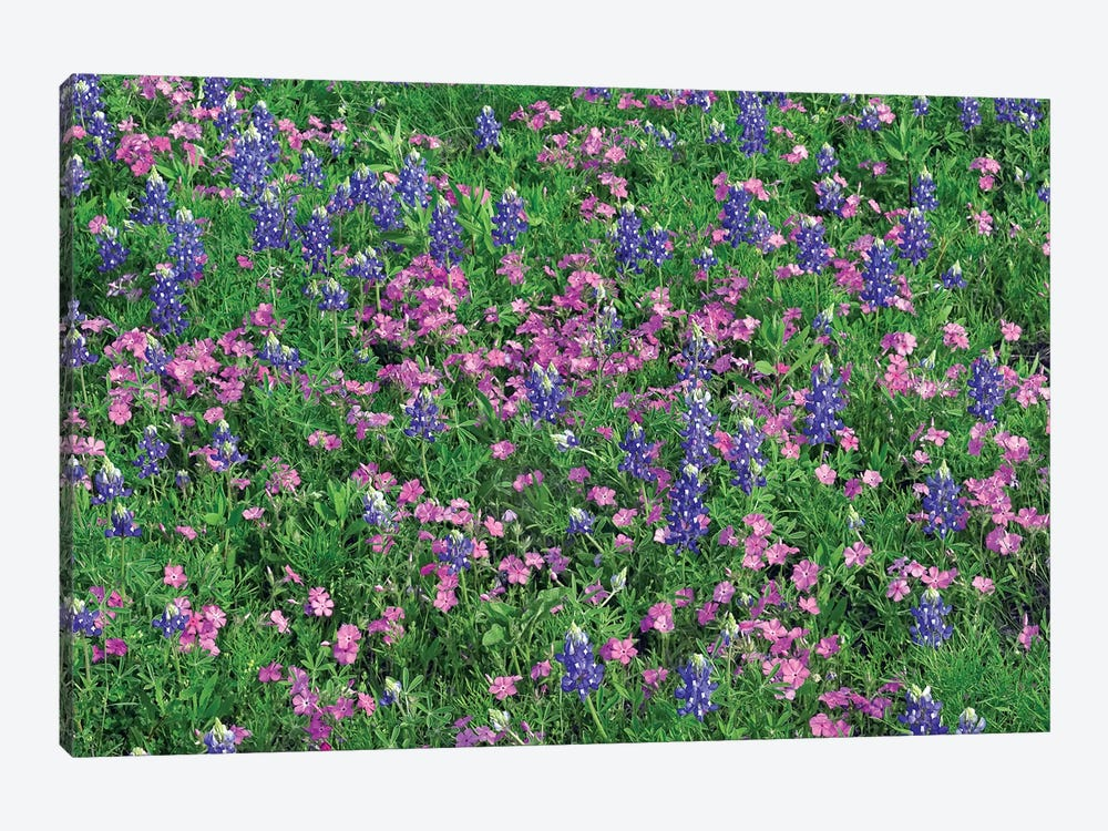 Sand Bluebonnet And Pointed Phlox by Tim Fitzharris 1-piece Canvas Wall Art