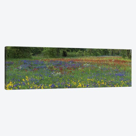 Sand Bluebonnet, Drummond's Phlox And Tickseed, Fort Parker State Park, Texas I Canvas Print #TFI947} by Tim Fitzharris Canvas Art