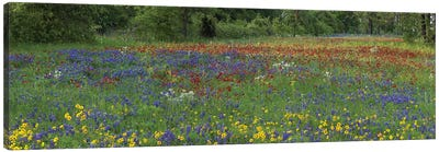 Sand Bluebonnet, Drummond's Phlox And Tickseed, Fort Parker State Park, Texas I Canvas Art Print