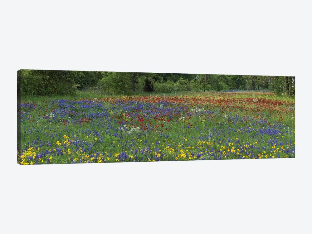 Sand Bluebonnet, Drummond's Phlox And Tickseed, Fort Parker State Park, Texas I by Tim Fitzharris 1-piece Canvas Print
