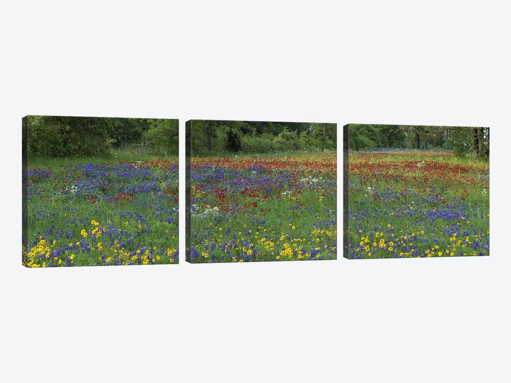 Sand Bluebonnet, Drummond's Phlox And Tickseed, Fort Parker State Park, Texas I by Tim Fitzharris 3-piece Canvas Art Print