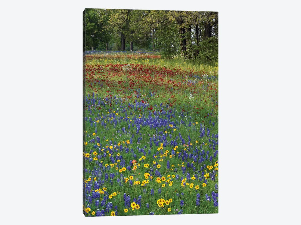 Sand Bluebonnet, Drummond's Phlox And Tickseed, Fort Parker State Park, Texas II by Tim Fitzharris 1-piece Canvas Art