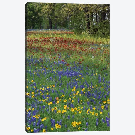 Sand Bluebonnet, Drummond's Phlox And Tickseed, Fort Parker State Park, Texas II Canvas Print #TFI948} by Tim Fitzharris Canvas Art Print
