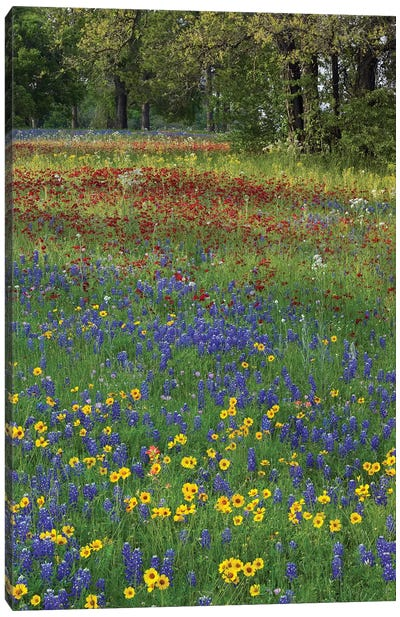Sand Bluebonnet, Drummond's Phlox And Tickseed, Fort Parker State Park, Texas II Canvas Art Print