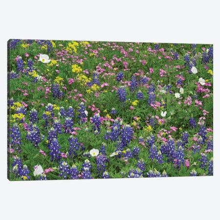 Sand Bluebonnet, Pointed Phlox, And Squaw-Weed, White Prickly Poppy Canvas Print #TFI949} by Tim Fitzharris Art Print