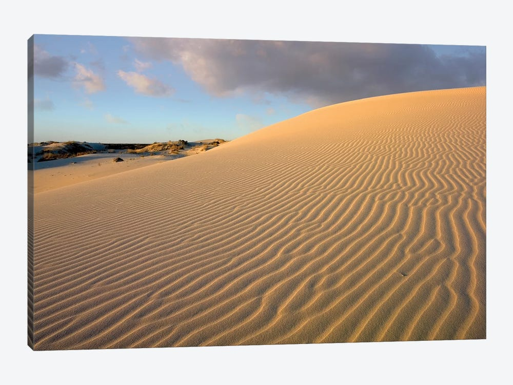 Sand Dune, Monahans Sandhills State Park, Texas by Tim Fitzharris 1-piece Canvas Wall Art
