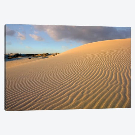 Sand Dune, Monahans Sandhills State Park, Texas Canvas Print #TFI951} by Tim Fitzharris Canvas Artwork