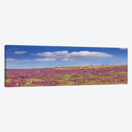 Sand Verbena Carpeting The Imperial Sand Dunes, California Canvas Print #TFI959} by Tim Fitzharris Canvas Wall Art