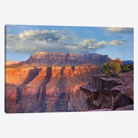 Sandstone Cliffs And Canyon Seen From Toroweap Overlook, Grand Canyon National Park, Arizona Canvas Print #TFI963} by Tim Fitzharris Canvas Print