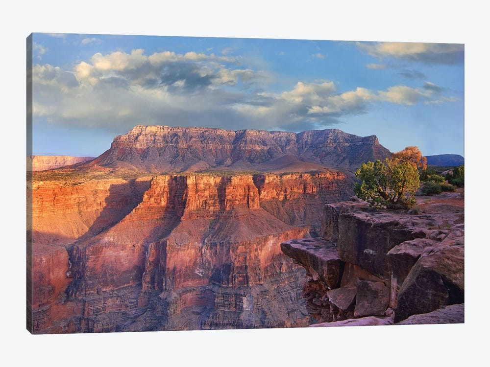 Sandstone Cliffs And Canyon Seen From Toroweap Overlook, Grand Canyon National Park, Arizona by Tim Fitzharris 1-piece Canvas Print
