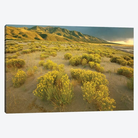 Sangre De Cristo Mountains At Great Sand Dunes National Monument, Colorado Canvas Print #TFI971} by Tim Fitzharris Canvas Wall Art