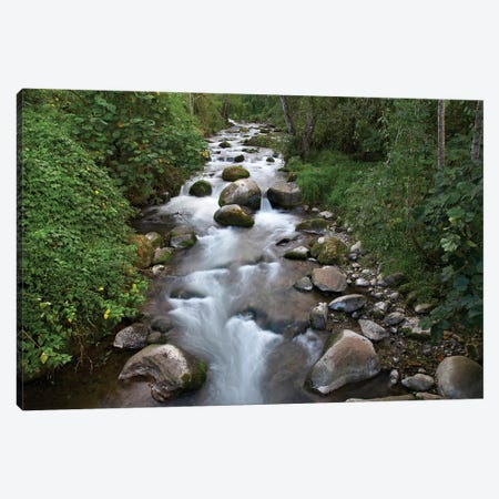 Savegre River Flowing Through Forest, Costa Rica Canvas Print #TFI972} by Tim Fitzharris Canvas Artwork