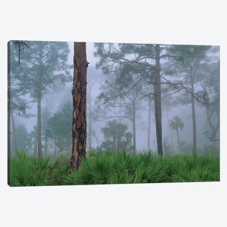 Saw Palmetto And Pine In Fog, Near Estero River, Florida Trees Canvas Print #TFI973} by Tim Fitzharris Canvas Art