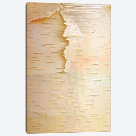 Birch Close Up Of Tree Trunk, North America Canvas Print #TFI97} by Tim Fitzharris Canvas Art