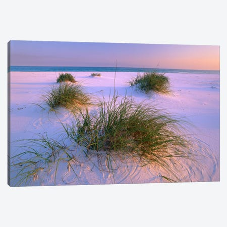 Sea Oats Growing On Beach, Santa Rosa Island, Gulf Islands National Seashore, Florida Canvas Print #TFI982} by Tim Fitzharris Canvas Print