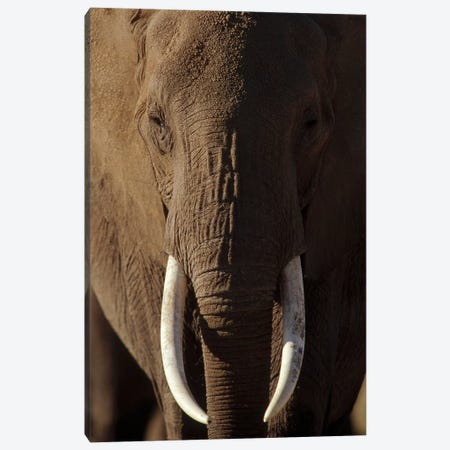 African Elephant Male Portrait With Long Tusks, Kenya Canvas Print #TFI9} by Tim Fitzharris Canvas Wall Art