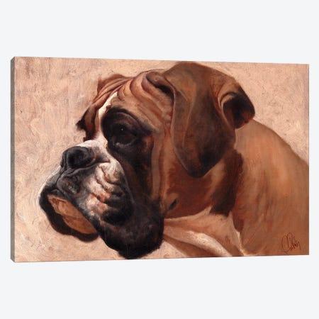 Boxer Canvas Print #TFL3} by Thomas Fluharty Canvas Print
