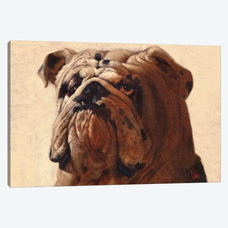 Bulldog Canvas Print #TFL4} by Thomas Fluharty Canvas Art