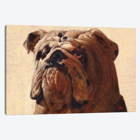 Bulldog Canvas Print #TFL4} by Thomas Fluharty Canvas Art