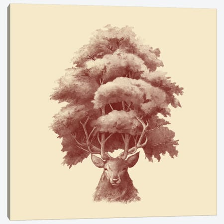Old Growth Square Canvas Print #TFN150} by Terry Fan Canvas Print