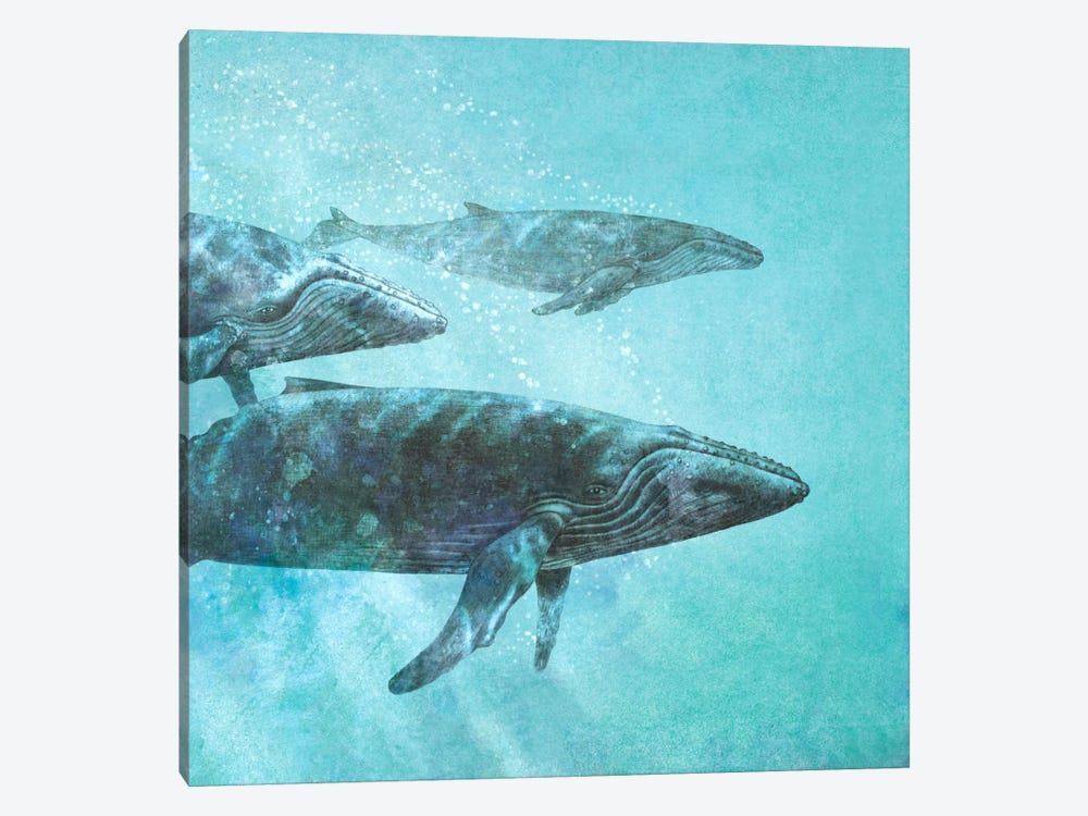Pod Square by Terry Fan 1-piece Canvas Art