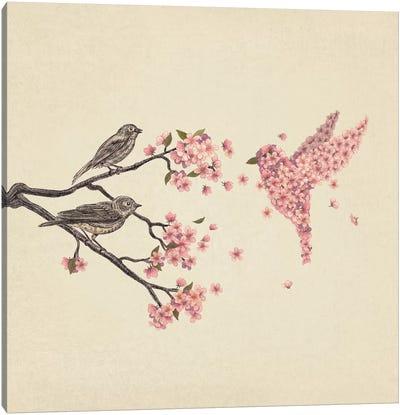 Blossom Bird Square Canvas Print #TFN18