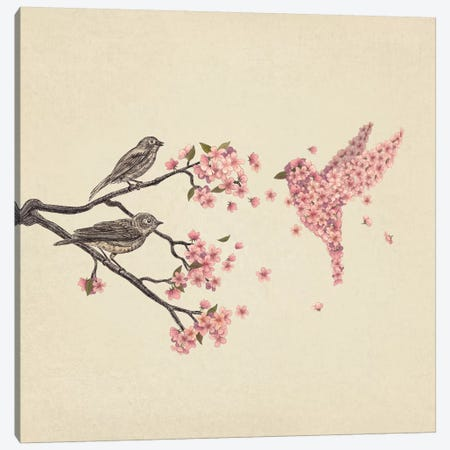 Blossom Bird Square Canvas Print #TFN18} by Terry Fan Canvas Wall Art