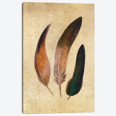 Three Feathers Canvas Print #TFN212} by Terry Fan Canvas Wall Art