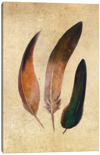 Three Feathers Canvas Art Print