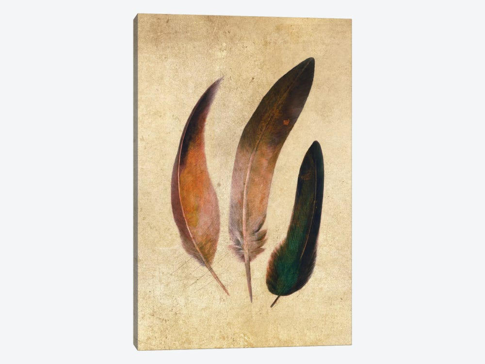 Three Feathers by Terry Fan 1-piece Canvas Art