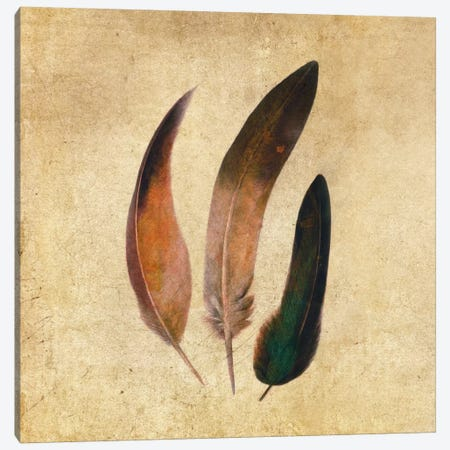 Three Feathers Square Canvas Print #TFN213} by Terry Fan Canvas Art