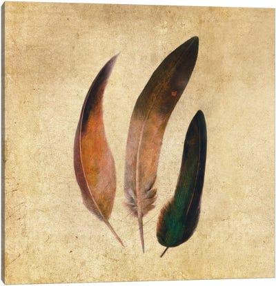 Three Feathers Square Canvas Art Print