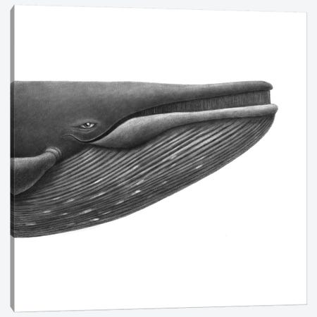Blue Whale Study Square Canvas Print #TFN258} by Terry Fan Canvas Wall Art