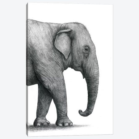 Elephant Study 3-Piece Canvas #TFN261} by Terry Fan Canvas Print