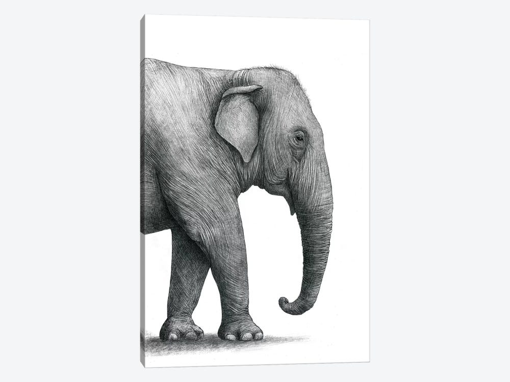 Elephant Study by Terry Fan 1-piece Canvas Wall Art