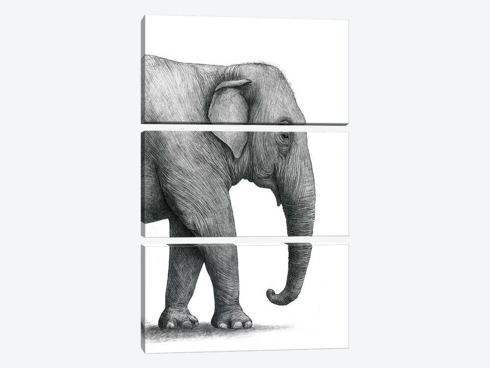Elephant Study by Terry Fan 3-piece Canvas Wall Art