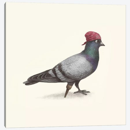 Pirate Pigeon Canvas Print #TFN269} by Terry Fan Canvas Print