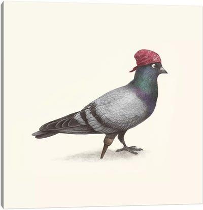 Pirate Pigeon Canvas Art Print