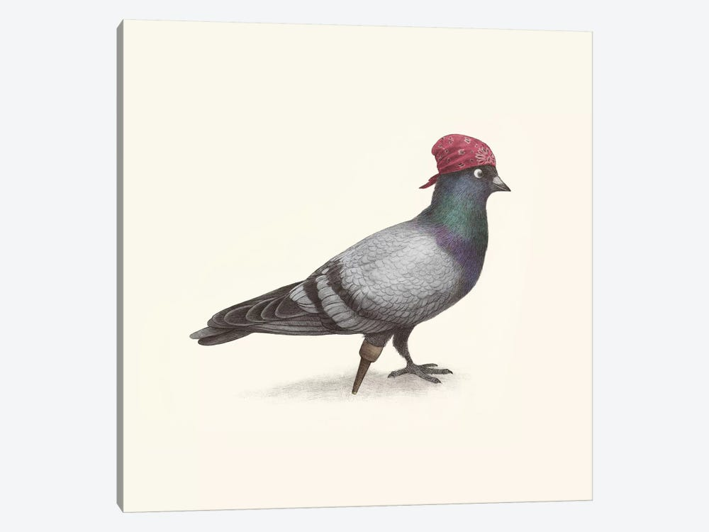 Pirate Pigeon 1-piece Canvas Artwork