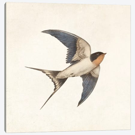 Barn Swallow I Canvas Print #TFN279} by Terry Fan Canvas Artwork