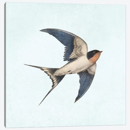 Barn Swallow II Canvas Print #TFN280} by Terry Fan Canvas Art Print