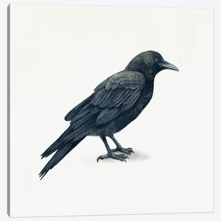 Crow Canvas Print #TFN289} by Terry Fan Canvas Art Print