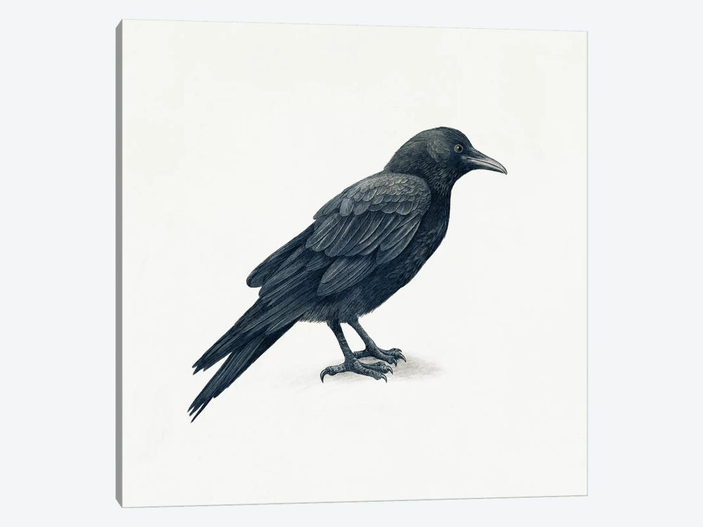 Crow by Terry Fan 1-piece Canvas Art
