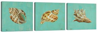 Ocean's Gift Triptych Canvas Art Print